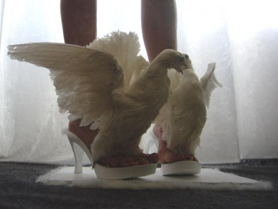 Туфли из голубей